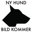 Ny_hund