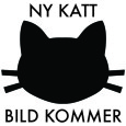 Ny_katt
