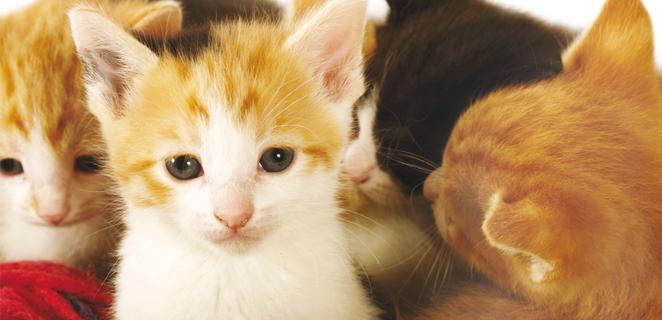 adoptera katt göteborg
