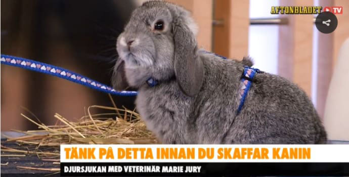 skaffa_kanin