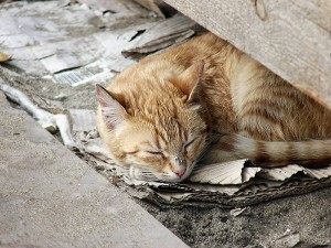 homeless_cat