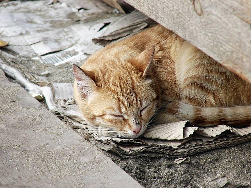 homeless_cat