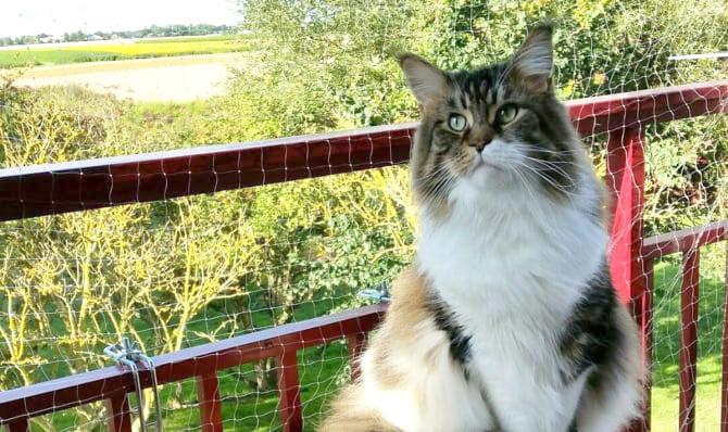 katt_balkong