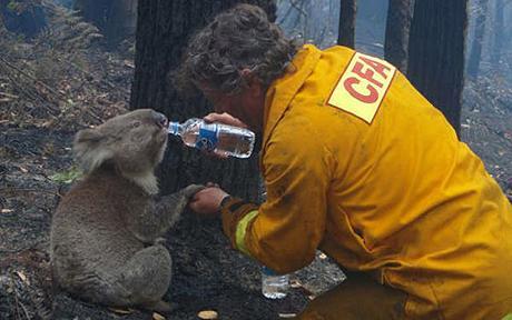 Foto: Världsnaturfonden WWF